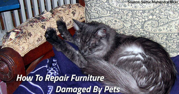 Furniture damaged by cat