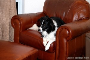 Your pet's favorite resting spot may need completely furniture refinishing at a certain point.