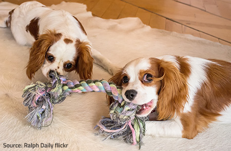Provide stimulating toys for your pets to prevent furniture damage