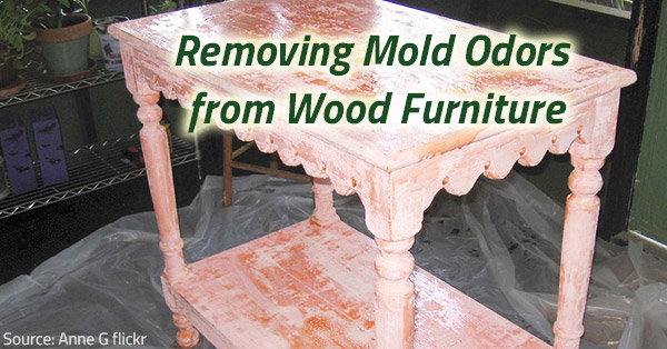 Removing mold from wood furniture.