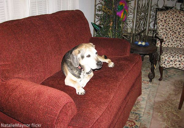 Too much pet hair is one of the main signs that your furniture needs professional cleaning.